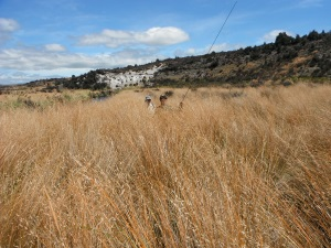 High country - high tussock