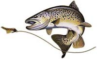 brown trout graphic